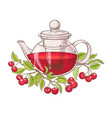 cherry tea in teapot vector image