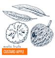 custard apple hand drawn vector image vector image