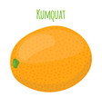 kumquat exotic fruit cartoon flat style vector image vector image