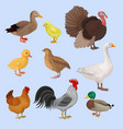 poultry birds set duck rooster chick goose vector image