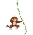 a monkey hanging on vine vector image