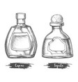 alcohol drink bottles sketch cognac and tequila vector image vector image