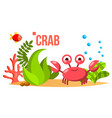 crab sea ocean bottom with seaweed and vector image