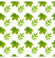 green autumn maple leaves white background vector image