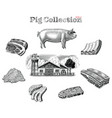 pig collection hand draw vintage engraving style vector image