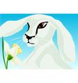 animal springtime vector image vector image
