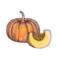 ink sketch of pumpkin vector image vector image