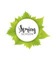 spring season letter and green leaves white vector image vector image