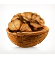 Walnut in shell icon vector image