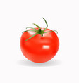 realistic fresh red tomato isolated vector image