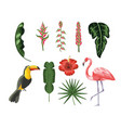 set toucan with flamingo and tropical leaves vector image vector image