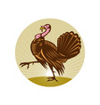 Wild turkey walking side view vector image vector image