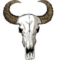 with goat skull hand drawn vector image