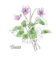 beautiful violets for bouquet on white background vector image vector image