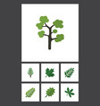 flat icon nature set of acacia leaf leaves maple vector image vector image