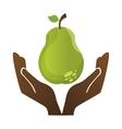 fresh pear farm product vector image vector image