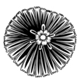 hand drawn doodle flower vector image