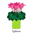cyclamen plant in pot icon vector image vector image