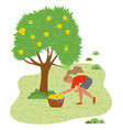 girl picking fresh yellow apples from grass in vector image
