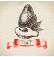Hand drawn sketch fruit avocado Eco food vector image vector image
