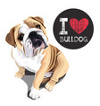 i love bulldog vector image vector image