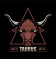 taurus zodiac vector image vector image