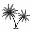 tropical palm trees with leaves black silhouettes vector image