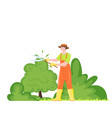 gardener trim bushes and trees with pruner vector image
