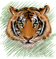 The tiger sketch vector image vector image