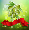 olive branch with red ribbon on a green background vector image vector image