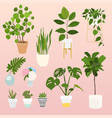set decorative house plants flowerpot isolated vector image