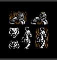 tiger and tiger head vector image vector image