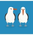 Two albatrosses are sitting next to each other vector image vector image
