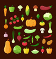 various vegetables color flat vector image