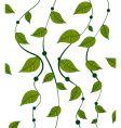 vines pattern vector image