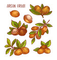 argan fruits plant branches sketch icons vector image vector image