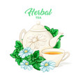 herbal tea hand drawn color vector image