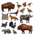 hunting sport animals and birds sketches vector image vector image