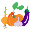 set of vegetables isolated on white vector image vector image