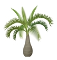 tropical exotic palm tree isolated vector image vector image