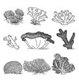 corals hand drawn vector image