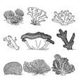 corals hand drawn vector image vector image