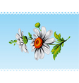 daisy flower background vector image vector image