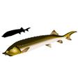 beluga vector image vector image