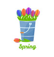 Colorfull tulips in the bucket vector image