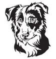 decorative portrait of dog border collie vector image vector image