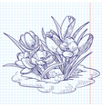 doodle crocuses growing through snow vector image