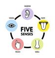 five senses line icons human ear and eye symbols vector image vector image