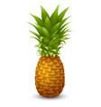 fresh ripe pineapple vector image