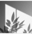 leaf or plant shadow on transparent background vector image vector image